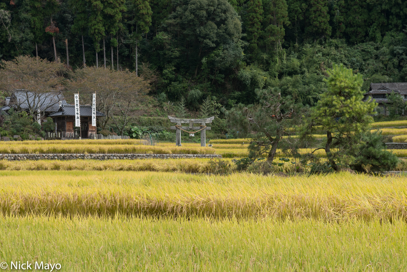 Japan,Kyushu,Paddy,Torii Gate, photo