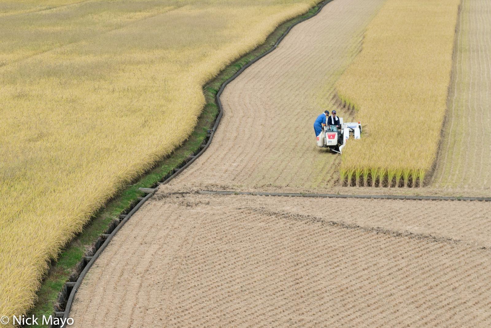 Harvesting,Japan,Kyushu,Paddy, photo