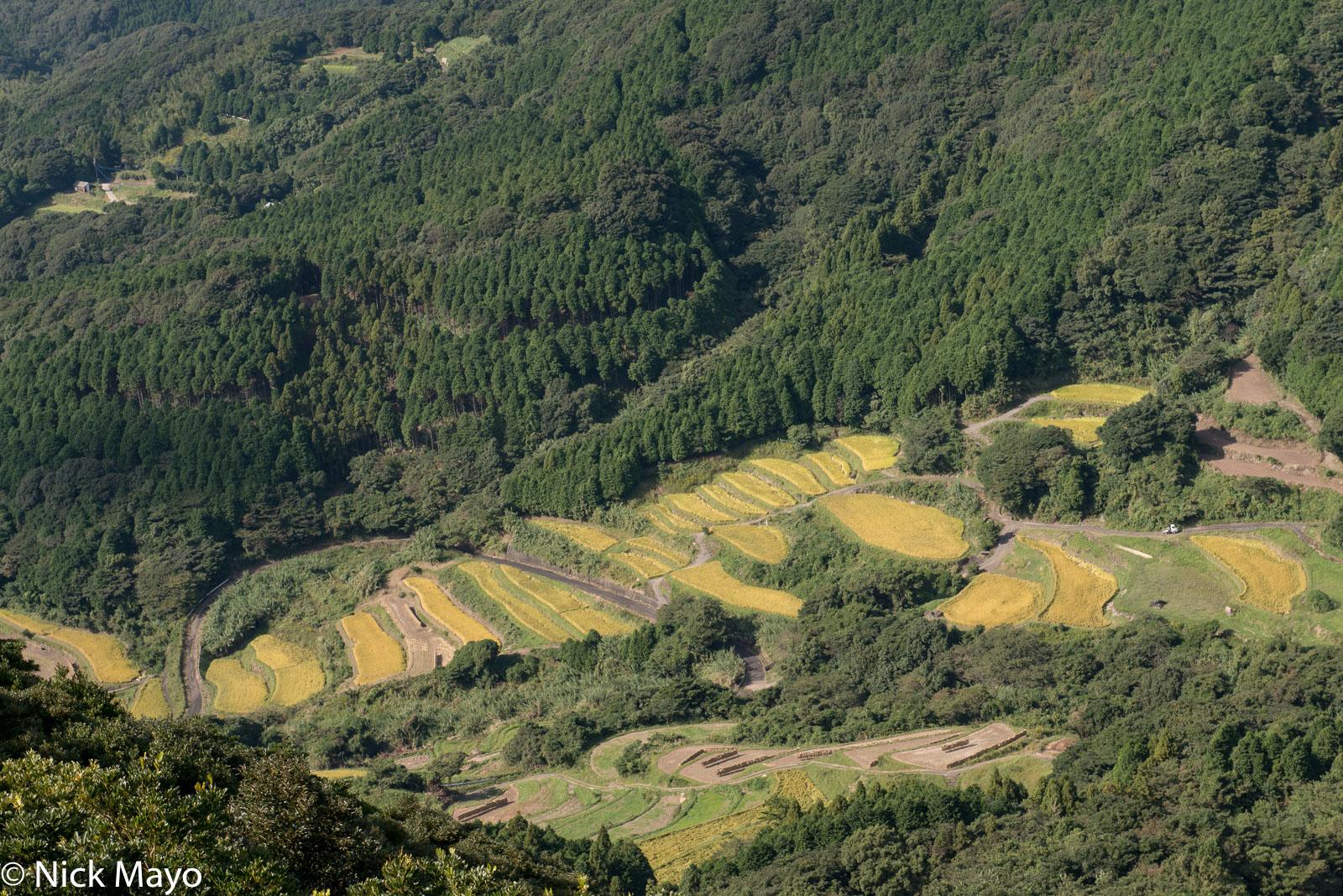 Terraced fields of paddy rice viewed from Hiyamizudake park in Nagasaki prefecture.