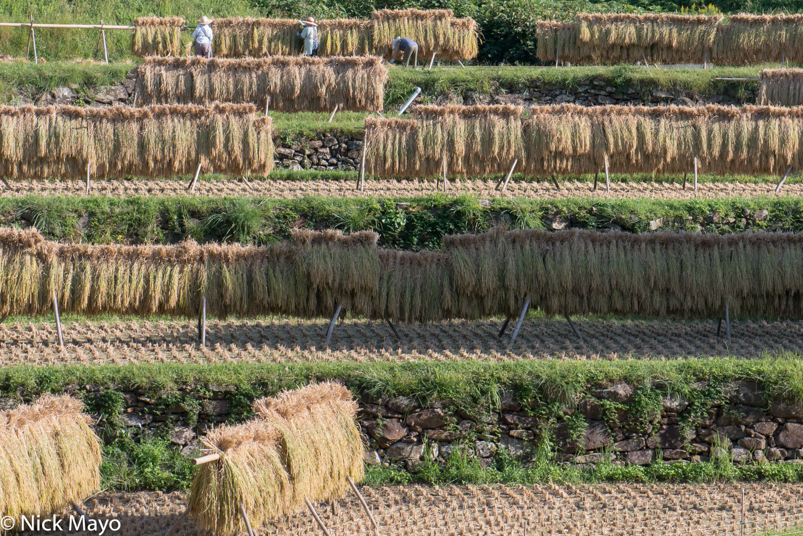 Drying Rack,Japan,Kyushu,Paddy, photo