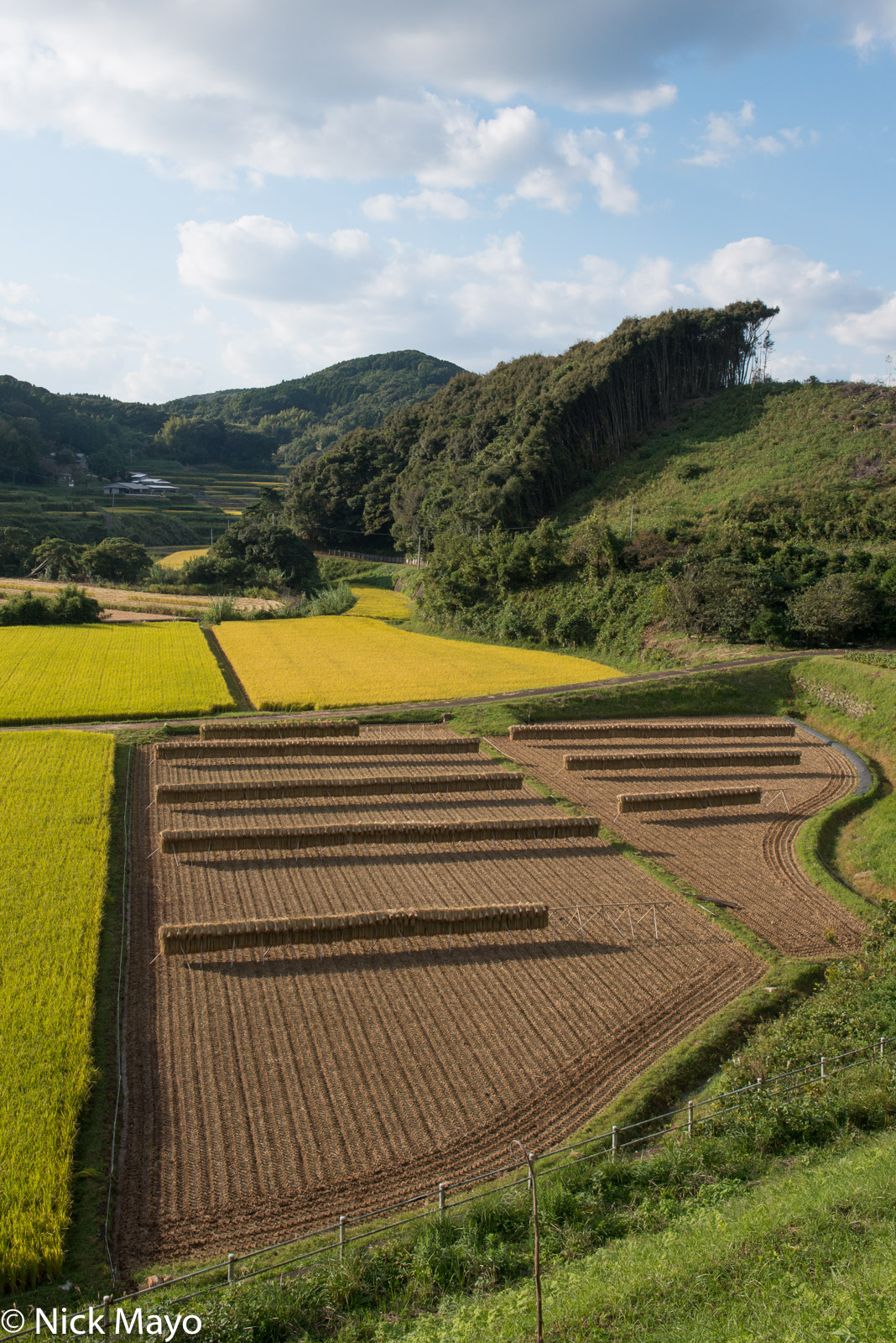 Drying Rack, Japan, Kyushu, Paddy, Agriculture
