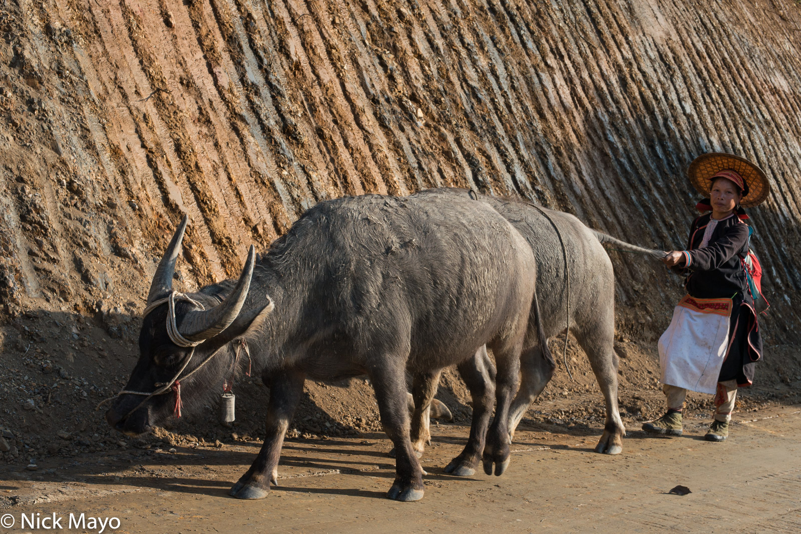 Lai Chau, Vietnam, Water Buffalo, Yao, photo