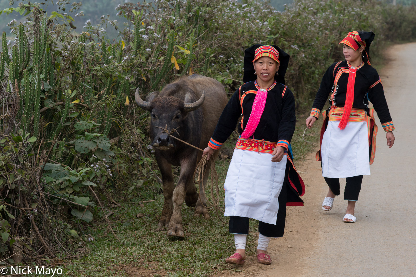 Apron, Earring, Hat, Lai Chau, Leggings, Vietnam, Water Buffalo, Yao, photo