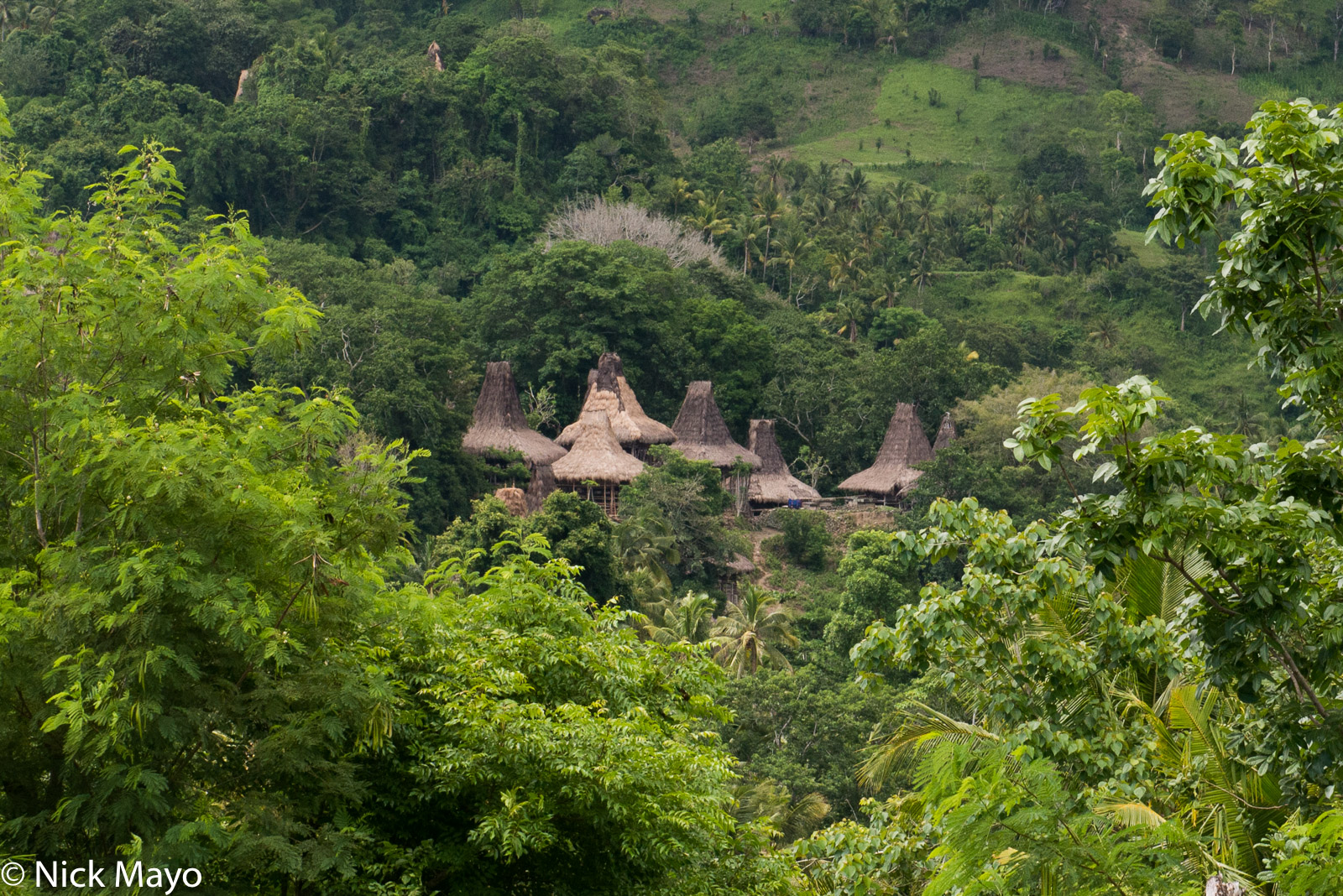Indonesia, Roof, Sumba, Thatch, Village, photo