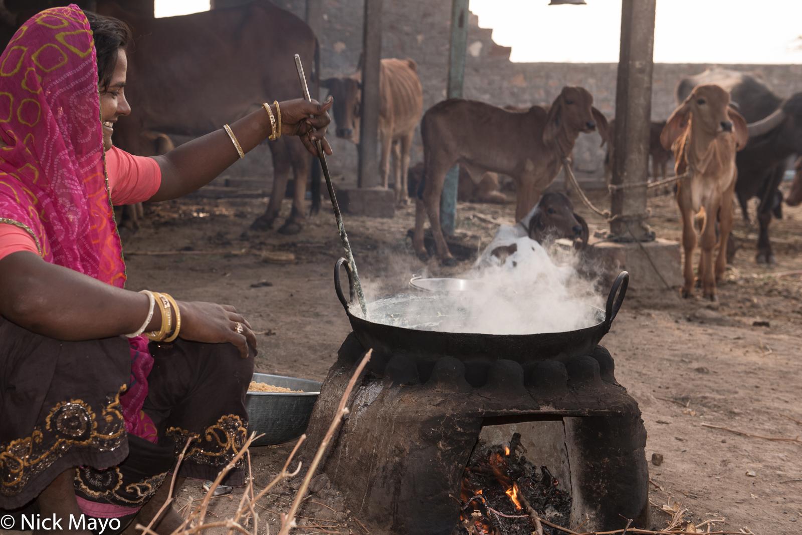 Bracelet, Cooking, Cow, Gujarat, Head Scarf, Hearth, India, Wok, photo