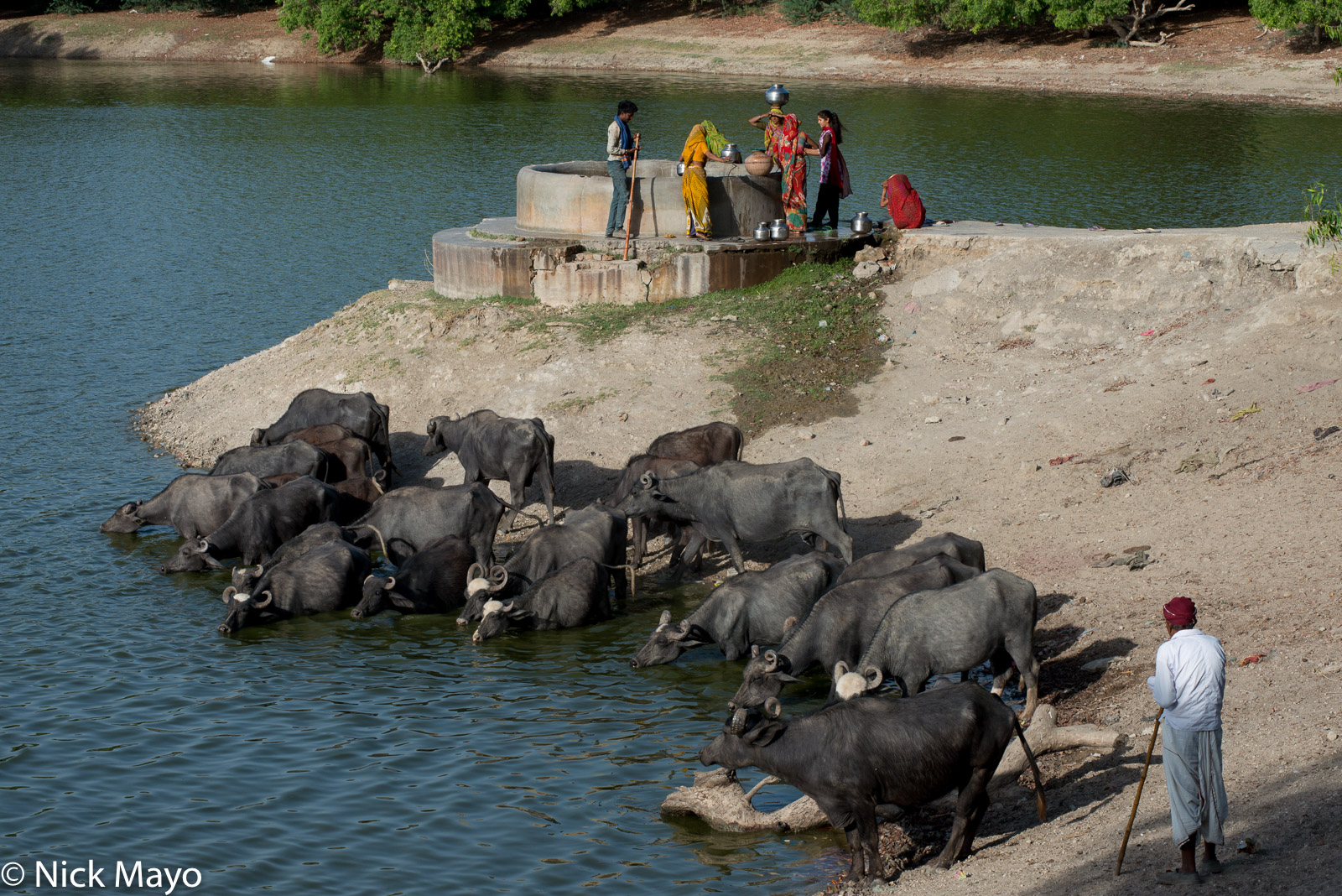 Fetching Water, Gujarat, India, Water Buffalo, photo