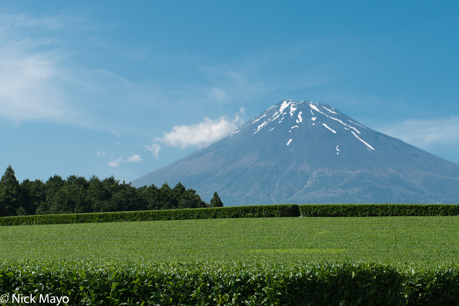 Japan, Kanto, Tea Field, photo