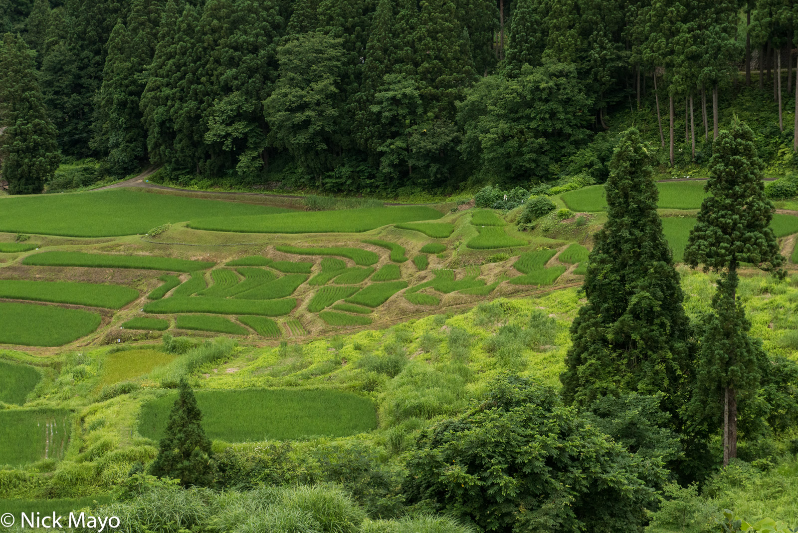 Japan, Paddy, Tohoku, photo