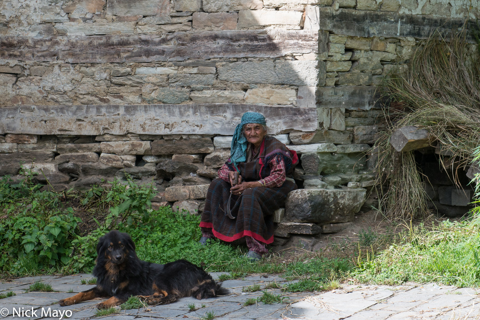 Dog, Head Scarf, Himachal Pradesh, India, photo