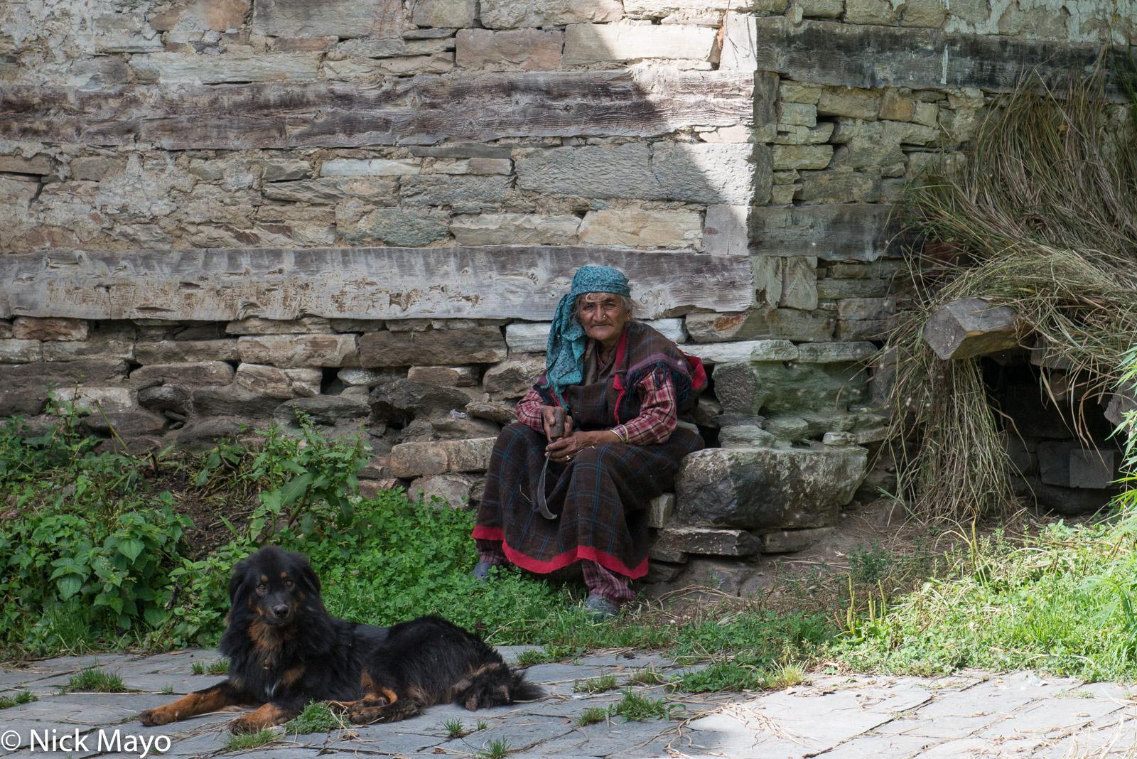 Dog, Head Scarf, Himachal Pradesh, India, photo