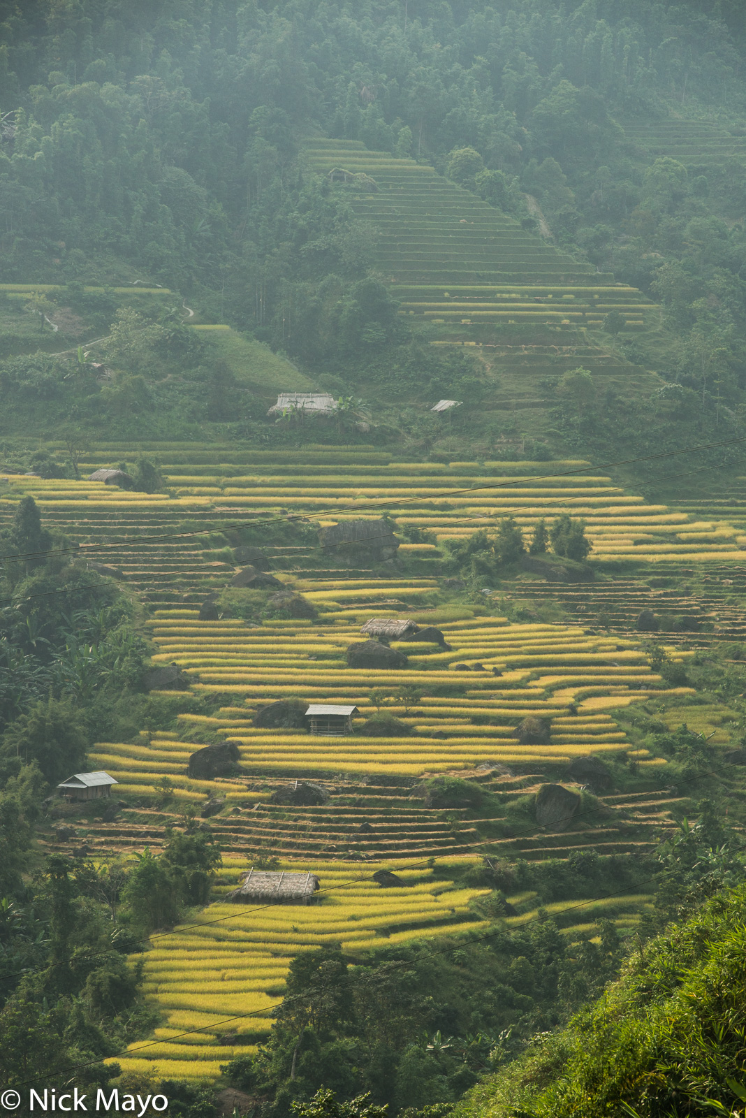 Multiple field huts on terraces of ripe paddy rice near Tan Minh.