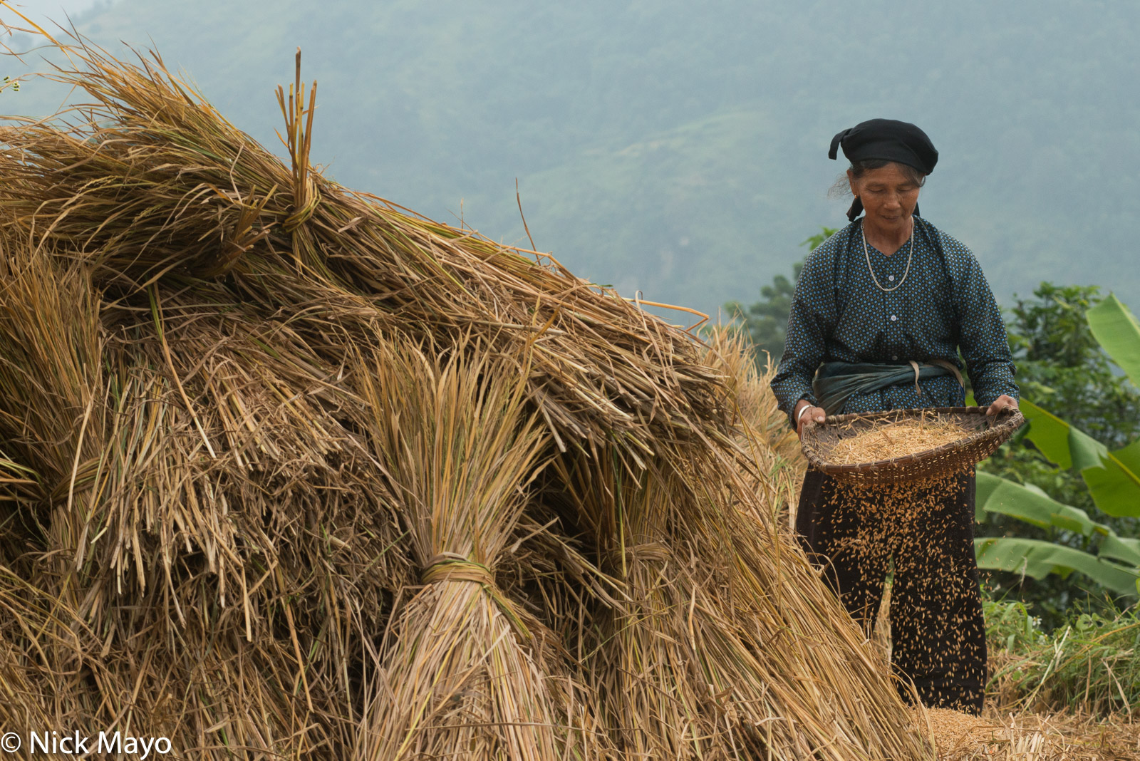 Ha Giang, Paddy, Vietnam, Winnowing, Zhuang, photo