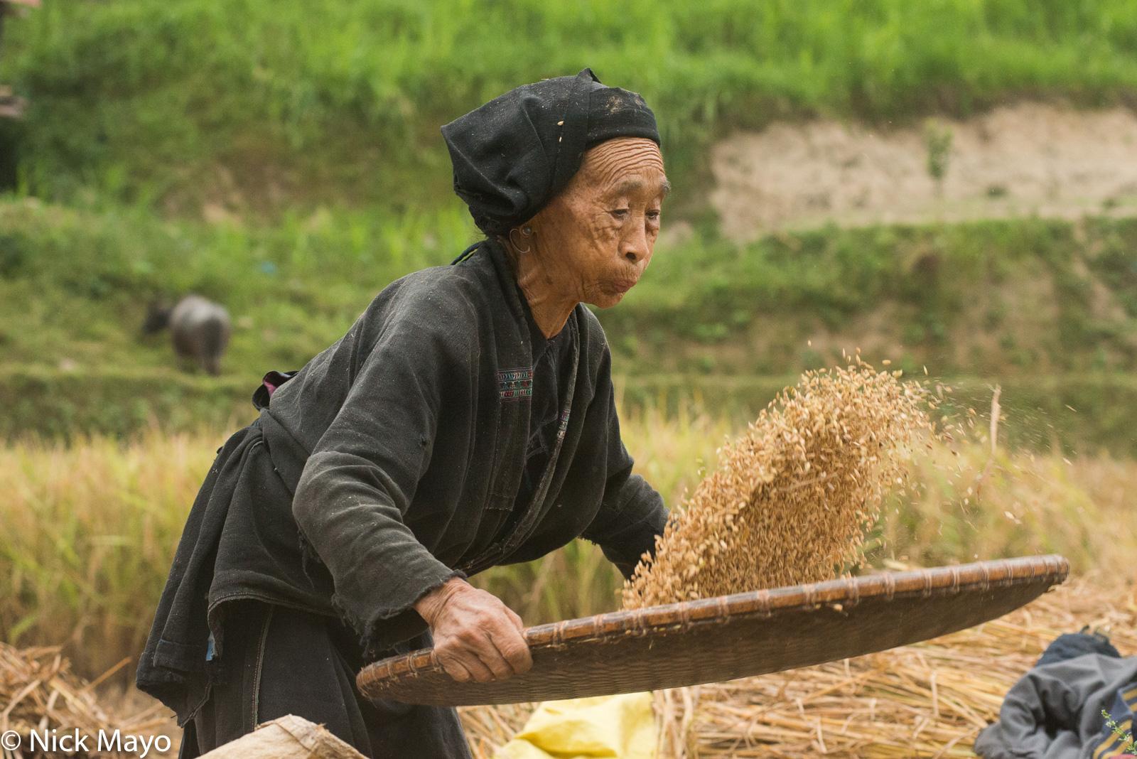 Ha Giang, Head Scarf, La Chi, Paddy, Vietnam, Winnowing, photo