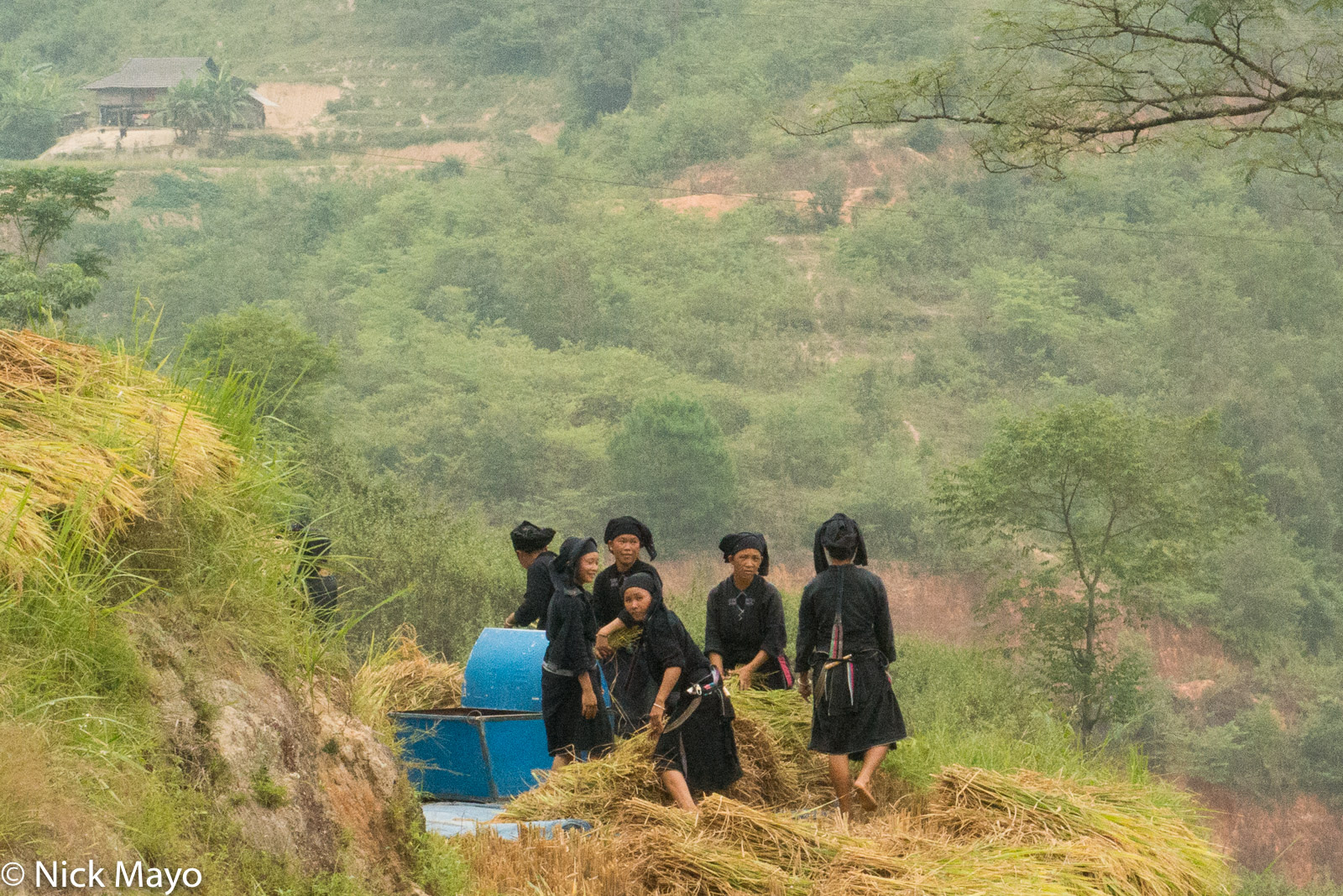 Ha Giang, Head Scarf, La Chi, Paddy, Thresher, Vietnam, photo