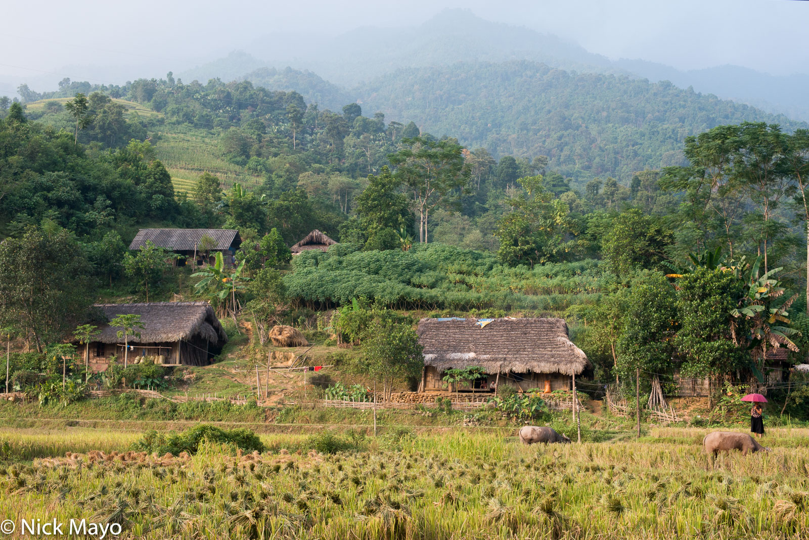 Ha Giang, Thatch, Vietnam, Village, Water Buffalo, photo