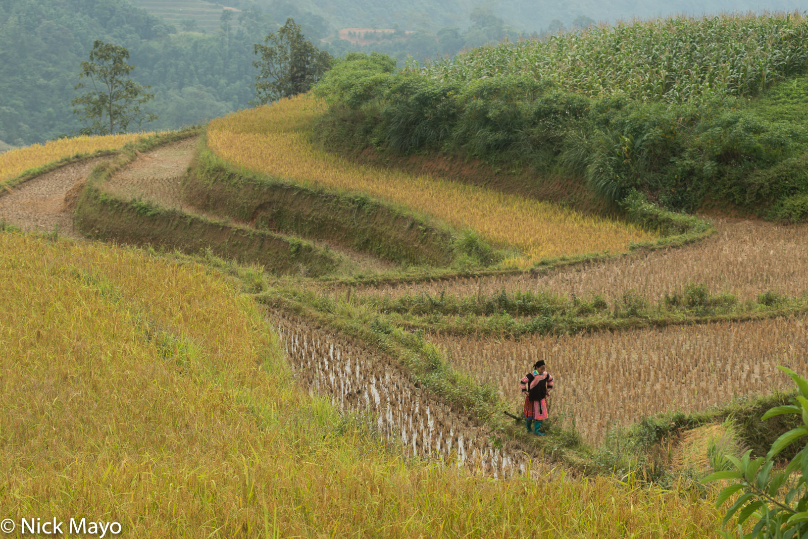 Apron, Ha Giang, Miao, Paddy, Vietnam, photo
