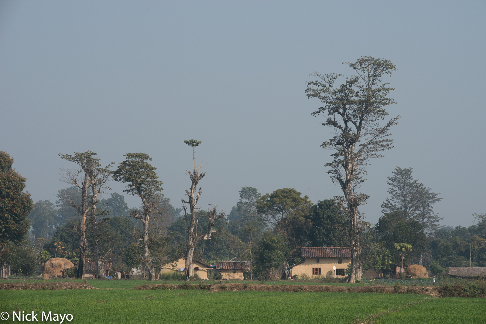 Nepal, Terai, Village, photo