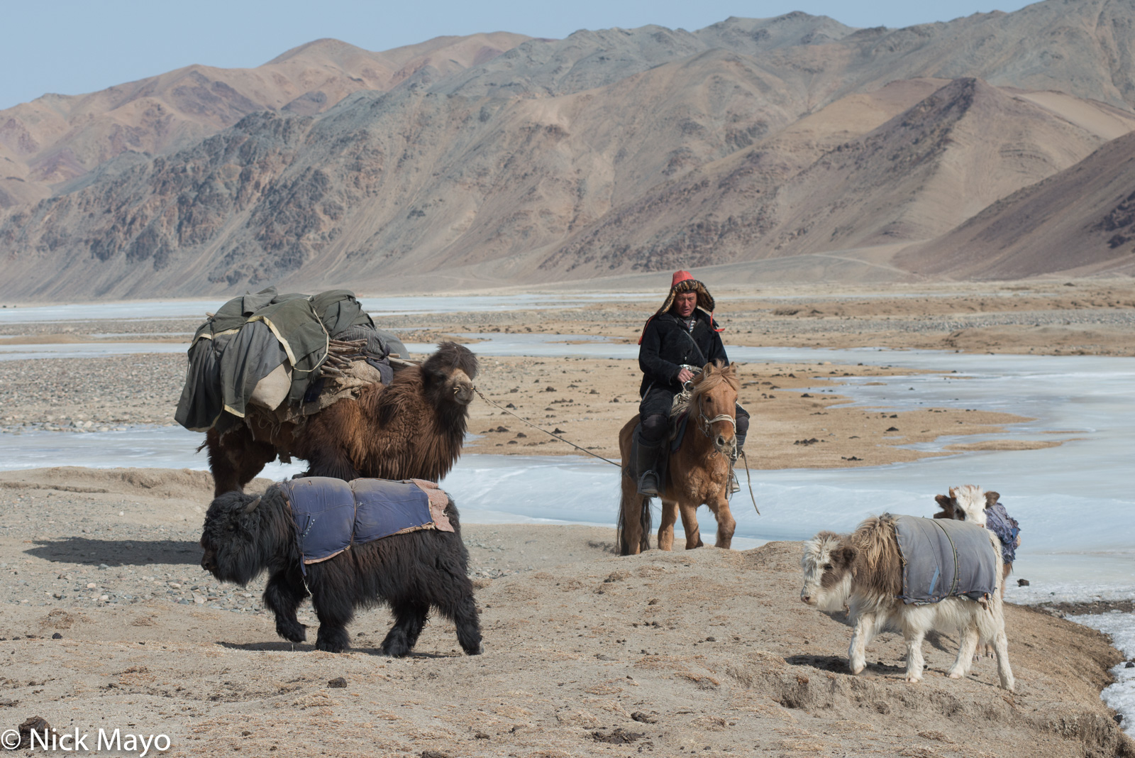 Bayan-Ölgii, Camel, Horse, Kazakh, Mongolia, Pack Animal, Yak, photo