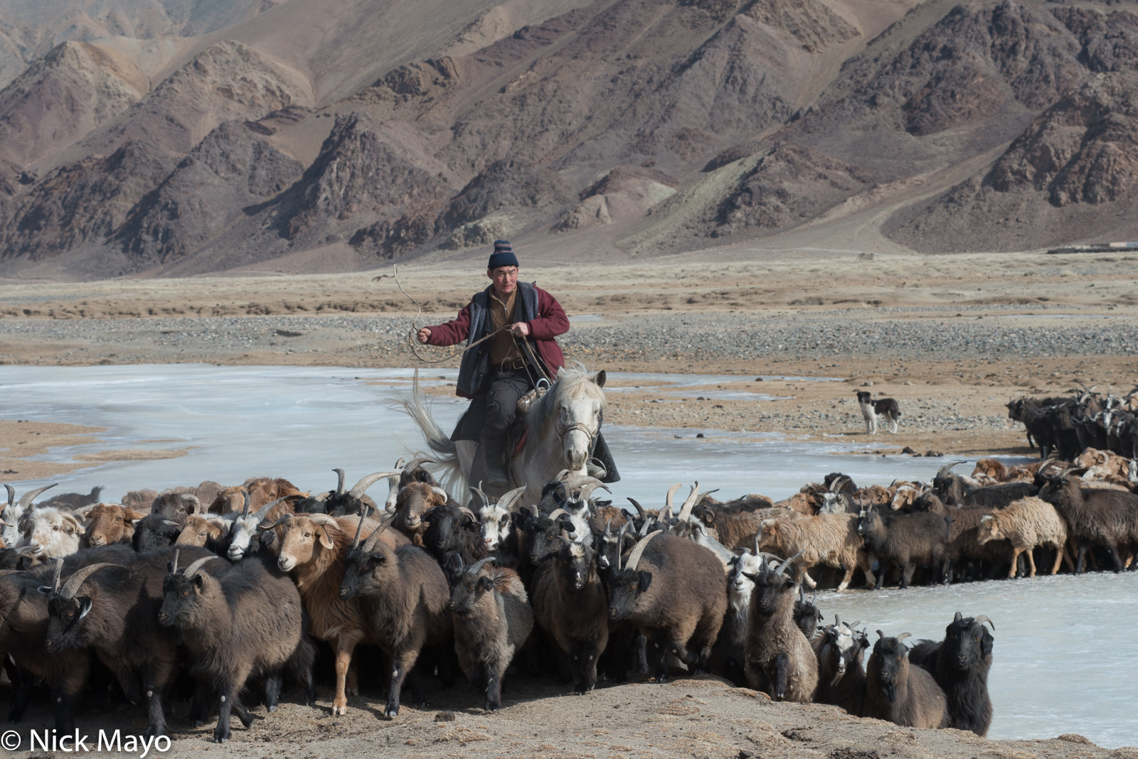 A Kazakh herder on horseback driving sheep and goats across a frozen river during their spring migration in Sagsai sum.