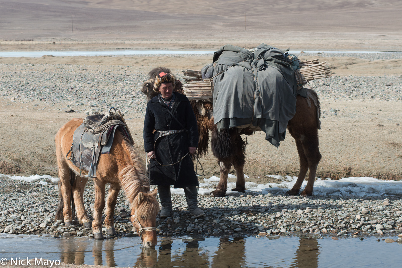 Bayan-Ölgii, Camel, Horse, Kazakh, Mongolia, Pack Animal, photo