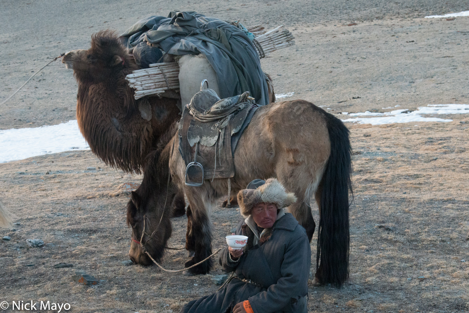 Bayan-Ölgii, Camel, Drinking, Horse, Kazakh, Mongolia, Pack Animal, Tea, photo