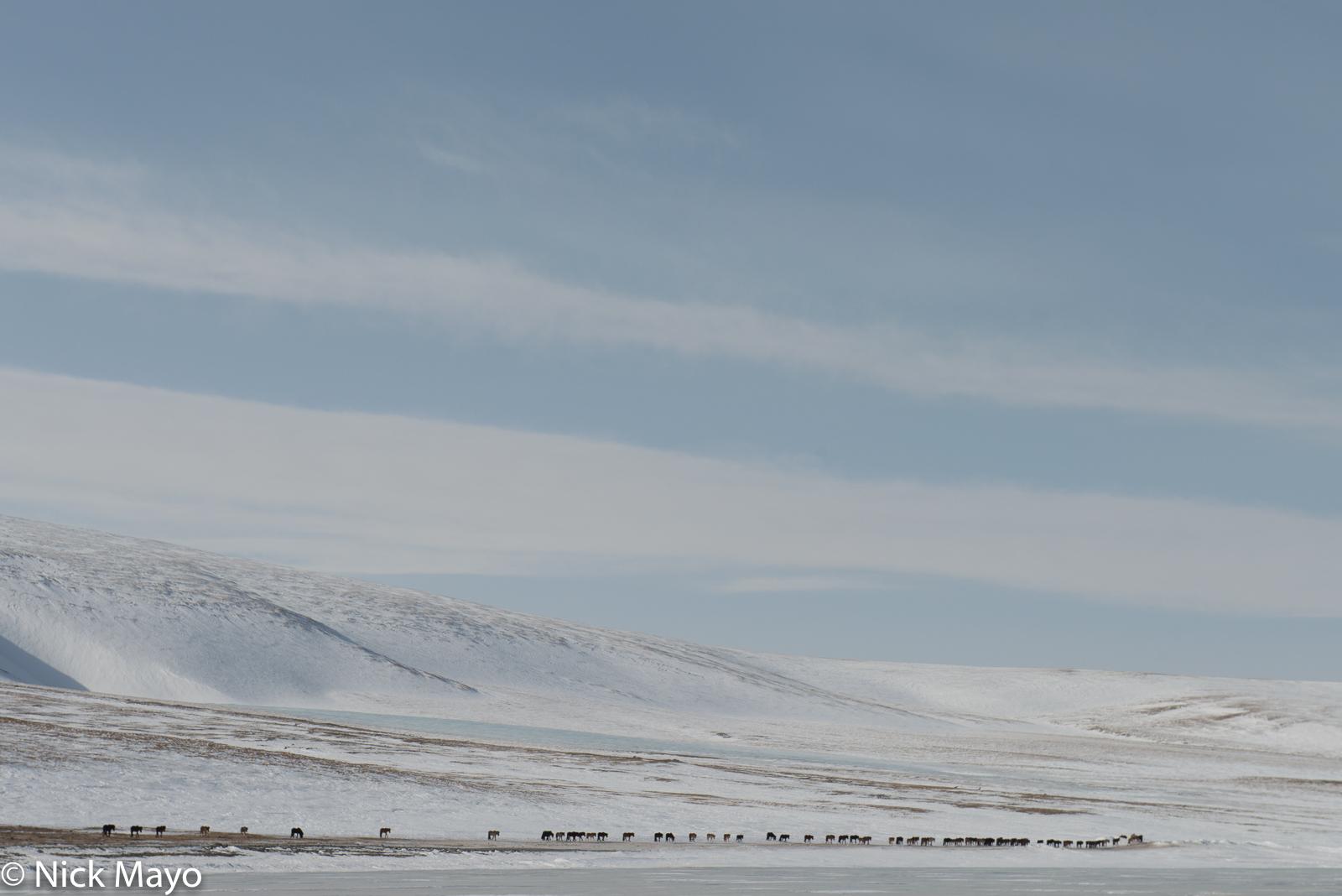Bayan-Ölgii, Horse, Mongolia, photo