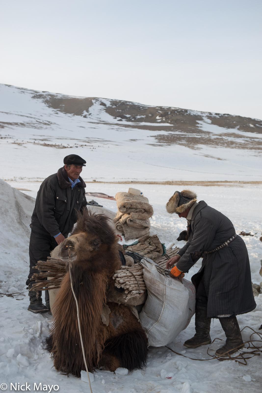 Bayan-Ölgii, Camel, Kazakh, Mongolia, Pack Animal, photo