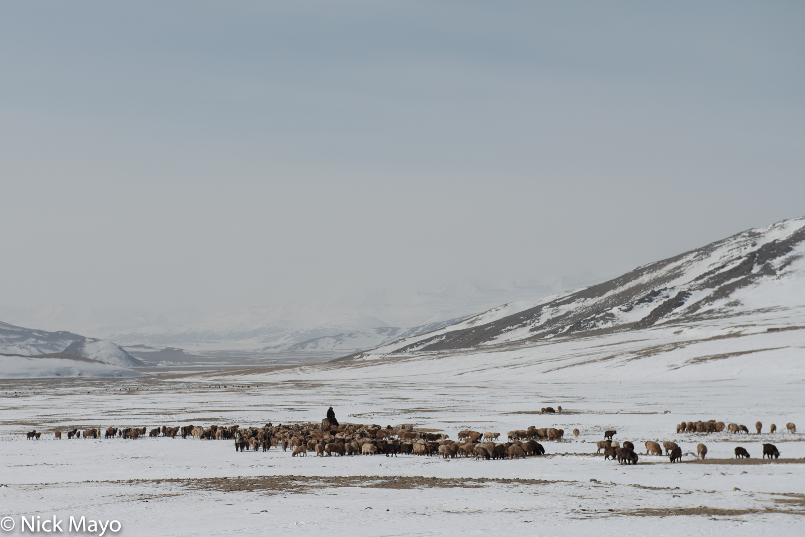 Bayan-Ölgii, Goat, Herding, Horse, Kazakh, Mongolia, Sheep, photo