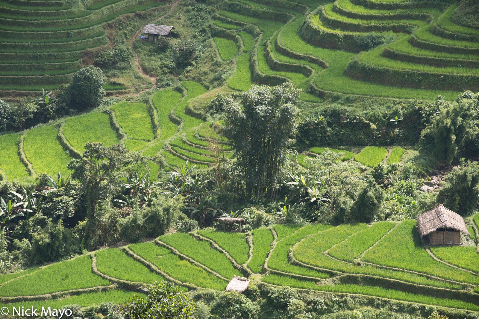 Ha Giang, Hut, Paddy, Vietnam, photo