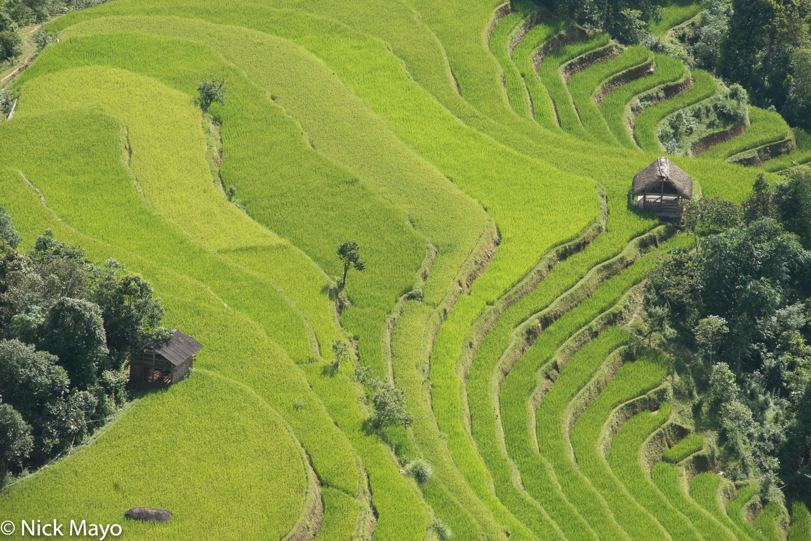 Ha Giang, Hut, Paddy, Vietnam, photo