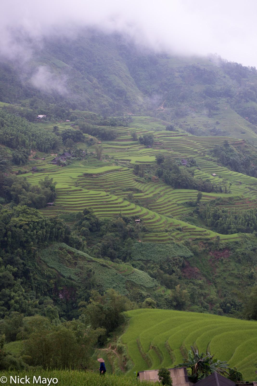 Ha Giang, Paddy, Vietnam, photo