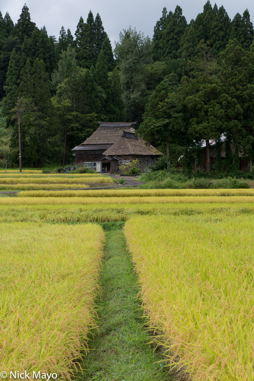A thatched house facing the paddy rice fields at Oginoshima.