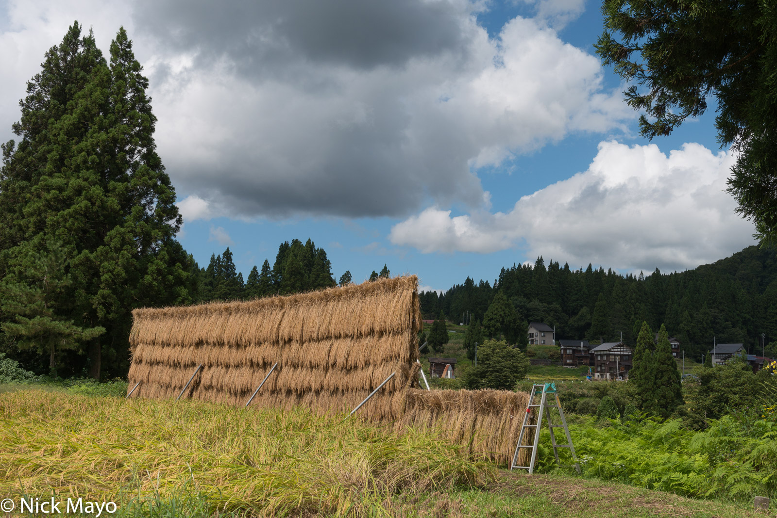 Chubu, Drying Rack, Japan, Paddy, photo