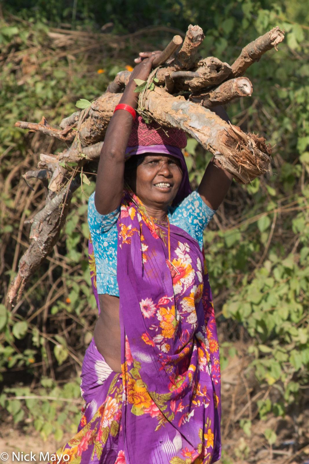 Firewood, India, Madhya Pradesh, photo