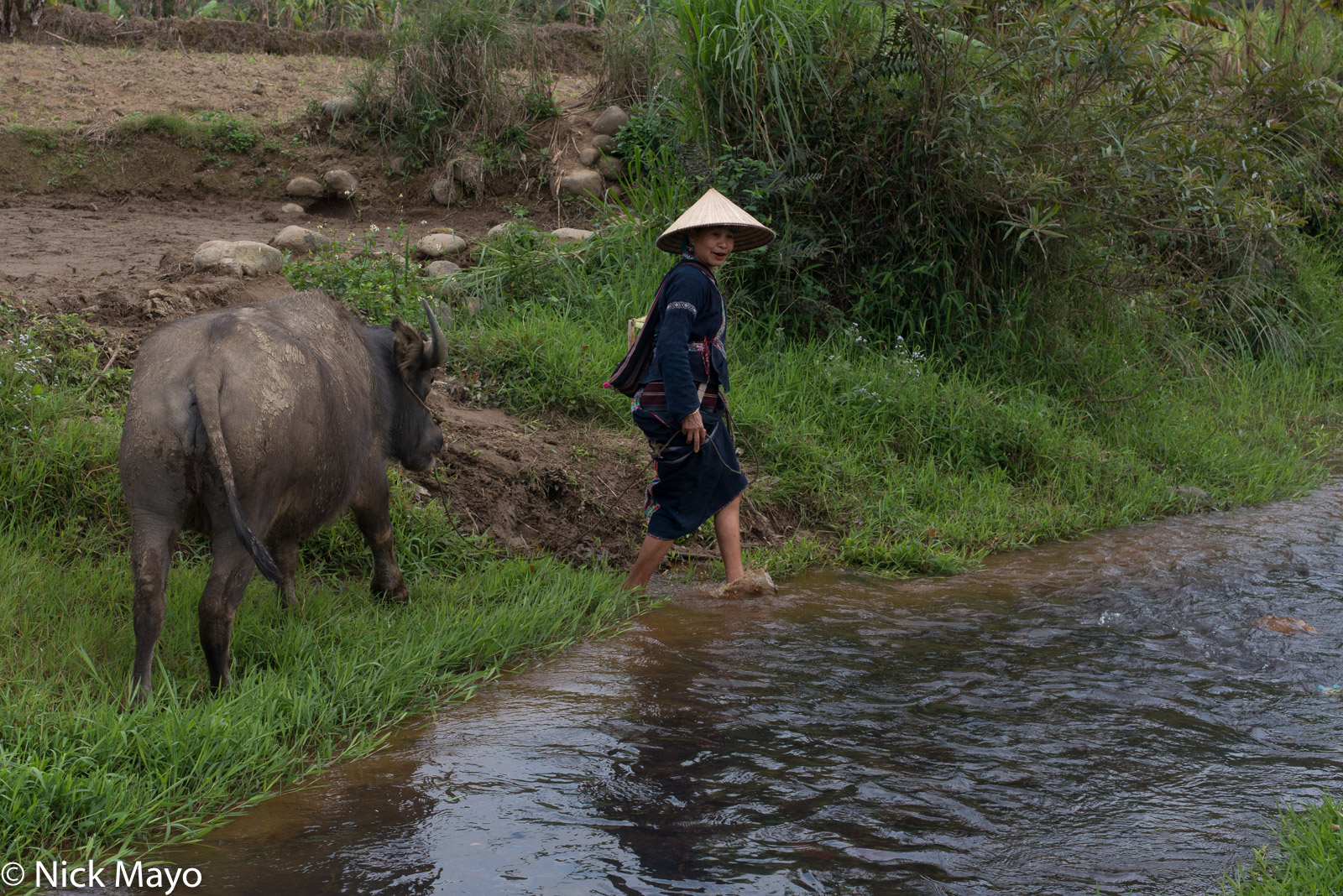Lai Chau, Lu, Vietnam, Water Buffalo, photo