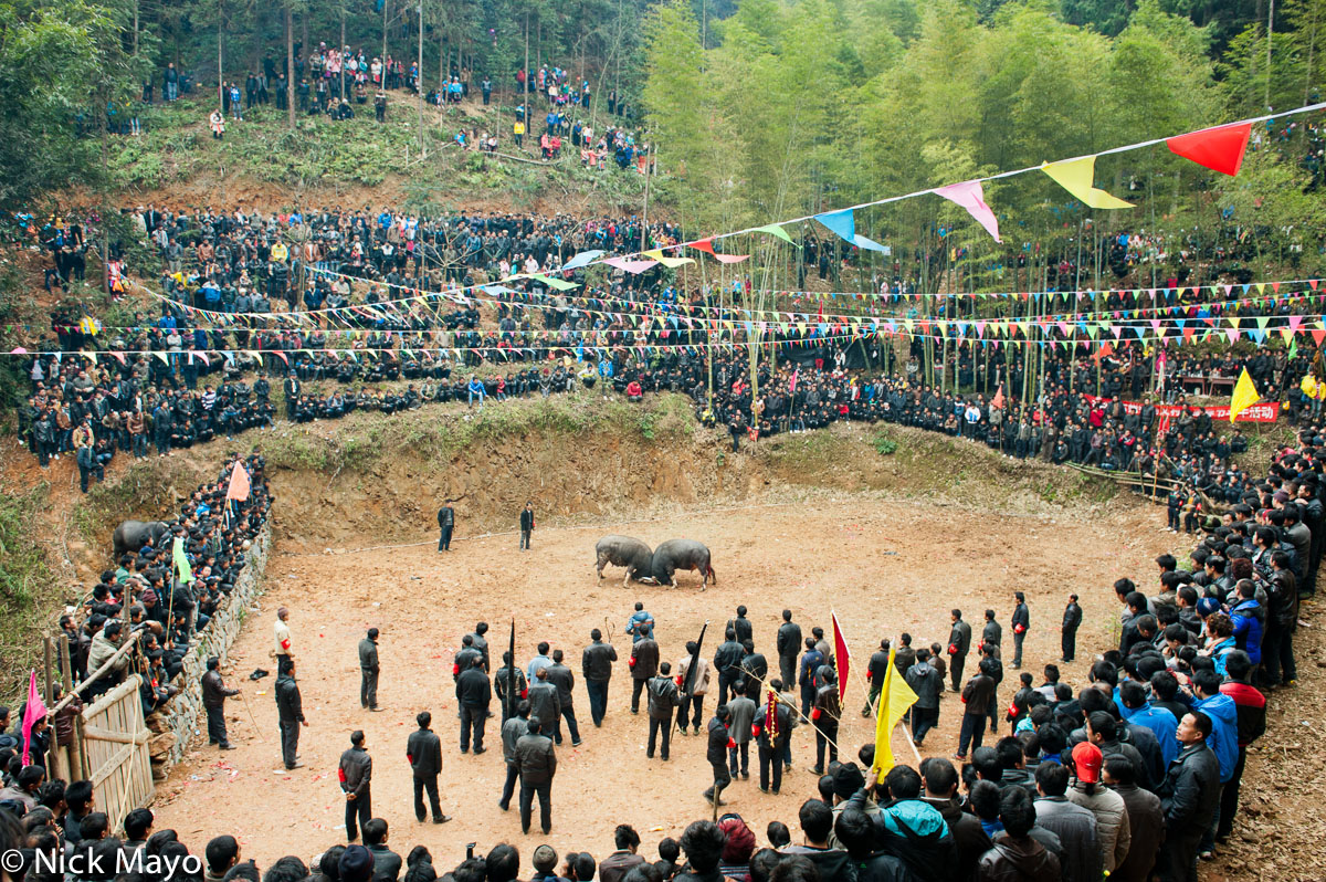 Bullfight,China,Guizhou,Miao,Water Buffalo, photo