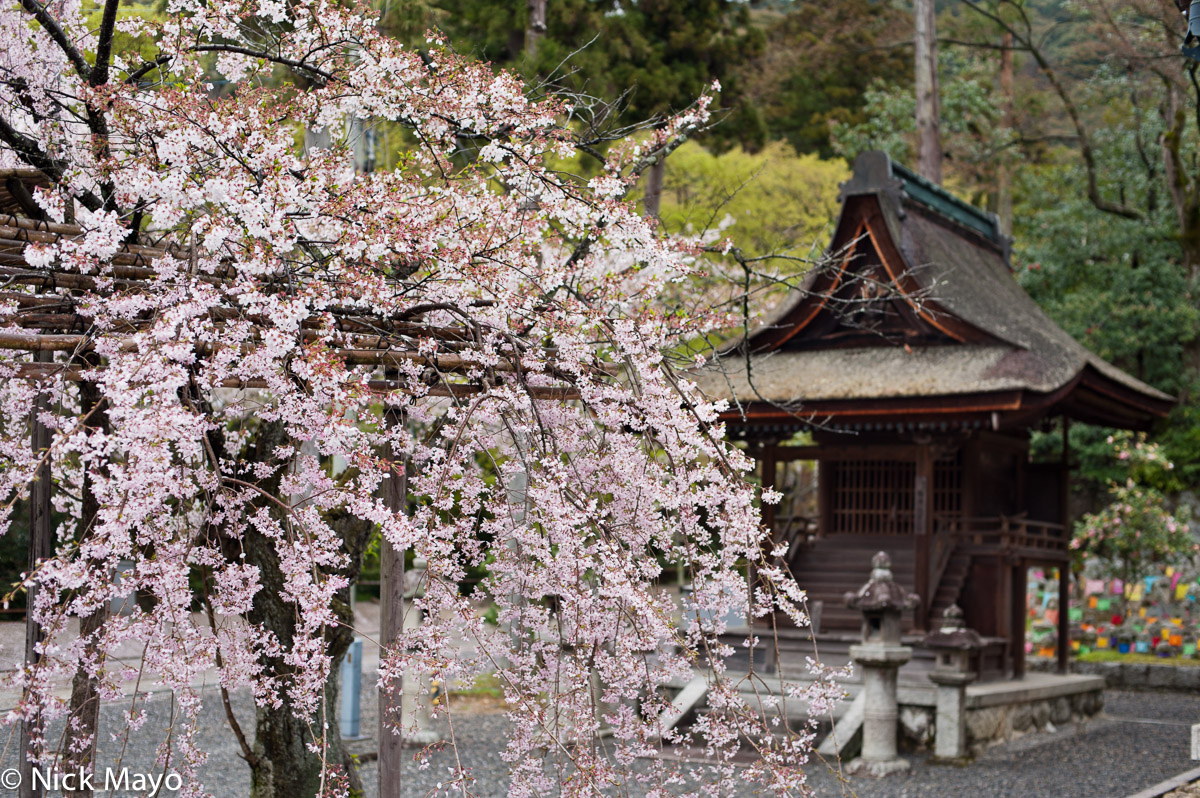 Japan,Kinki,Shrine,Thatch, photo