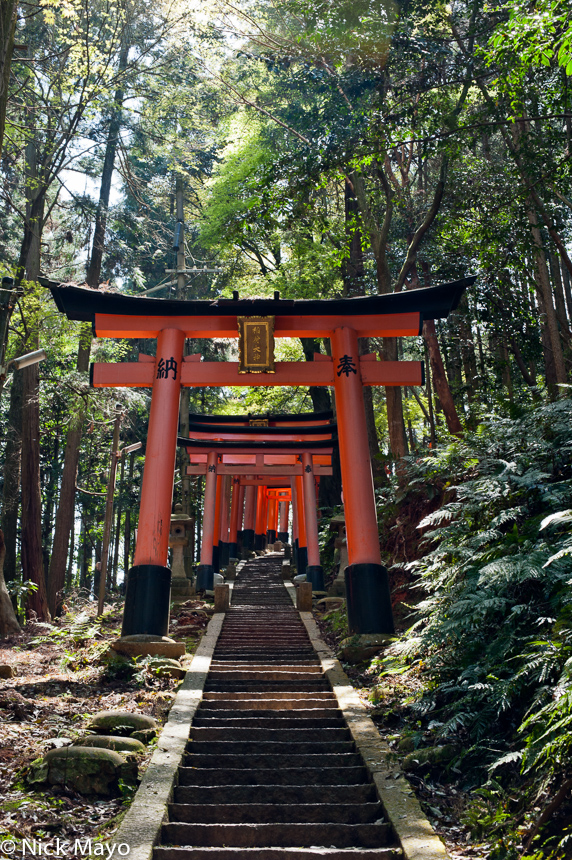 Torii gates over a stairway on the hill behind the Fushimi Inari shrine.