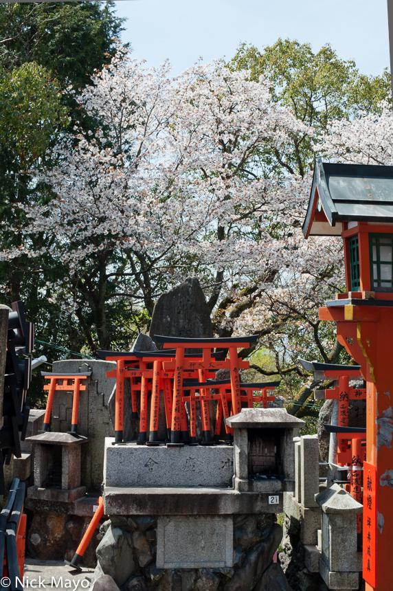 Miniature torii statues on the hill behind the Fushimi Inari Shrine.
