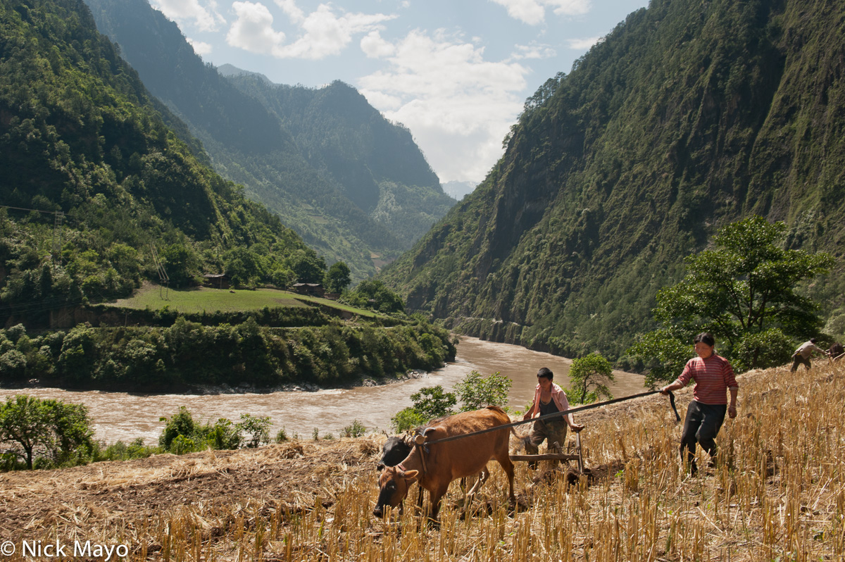 Bullock,China,Lisu,Plough,Ploughing,Yunnan, photo
