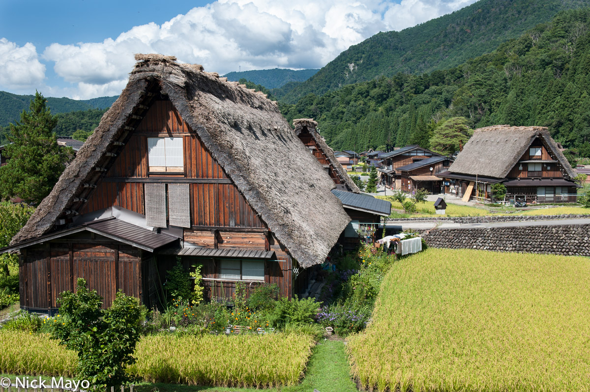 Thatched roof gassho houses among paddy fields in Shirakawa.