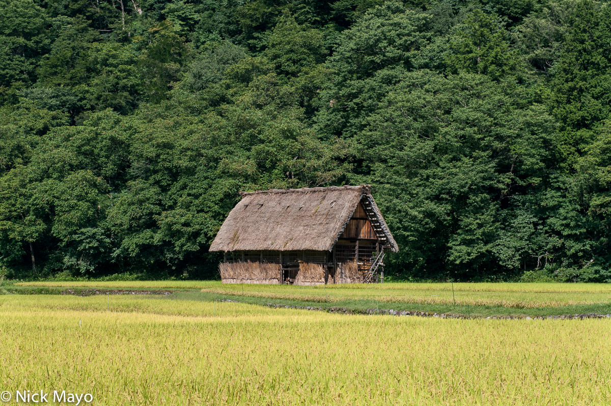 A thatched roof hut at the edge of a paddy field in Shirakawa.