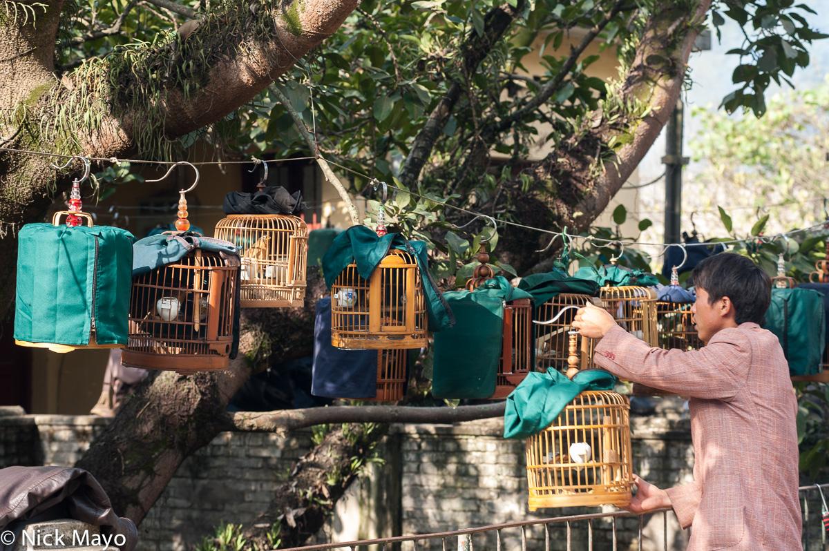 Bird,China,Yunnan, photo