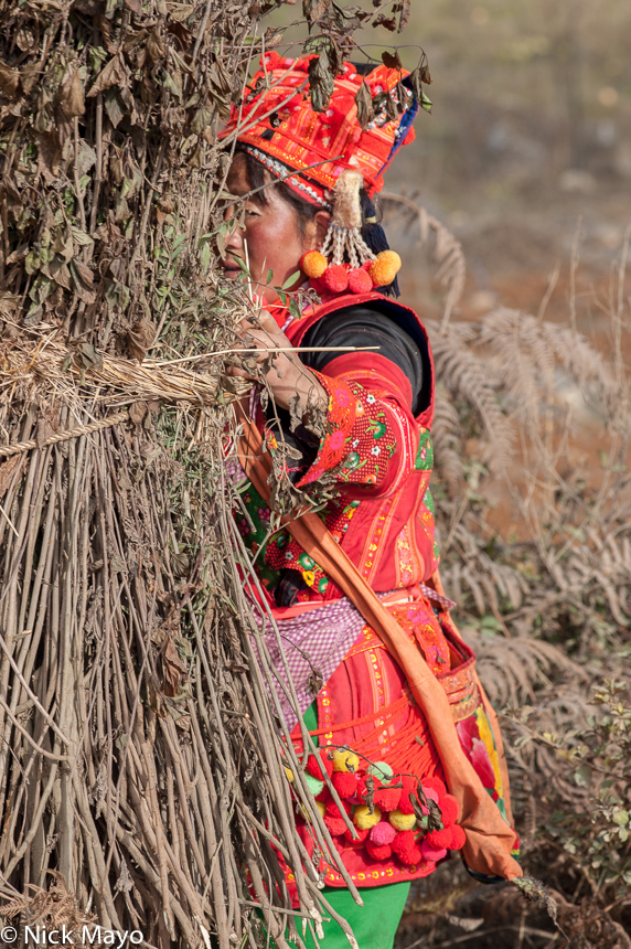 A shy Xibeile Yi women, wearing traditional clothes and hat, hiding behind a bundle of grasses.