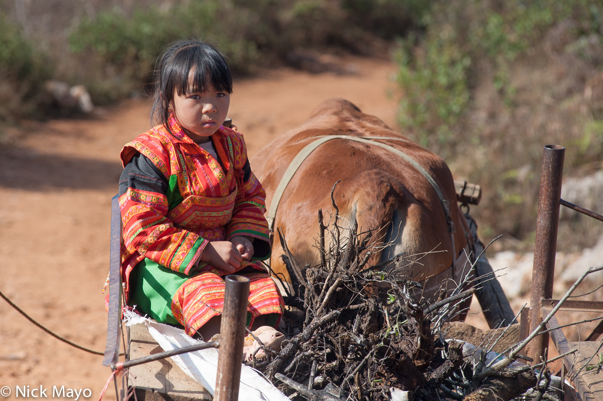 A Yi girl from the Xibeile area taking a ride on a cart.