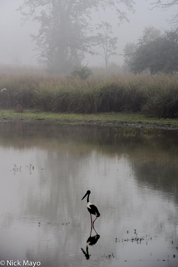 Assam,Bird,India, photo