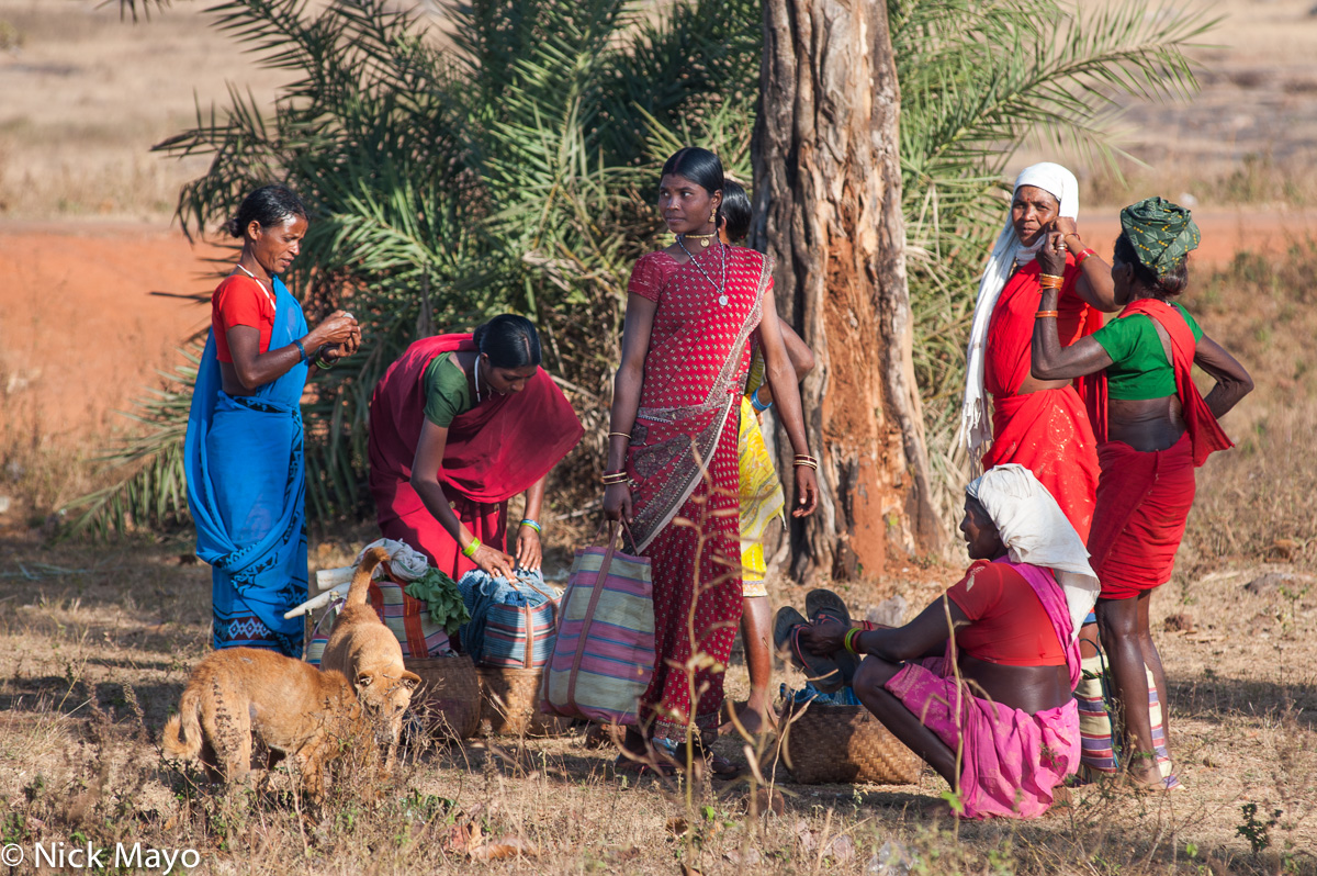 Chhattisgarh,Dog,Gond,India,Market, photo