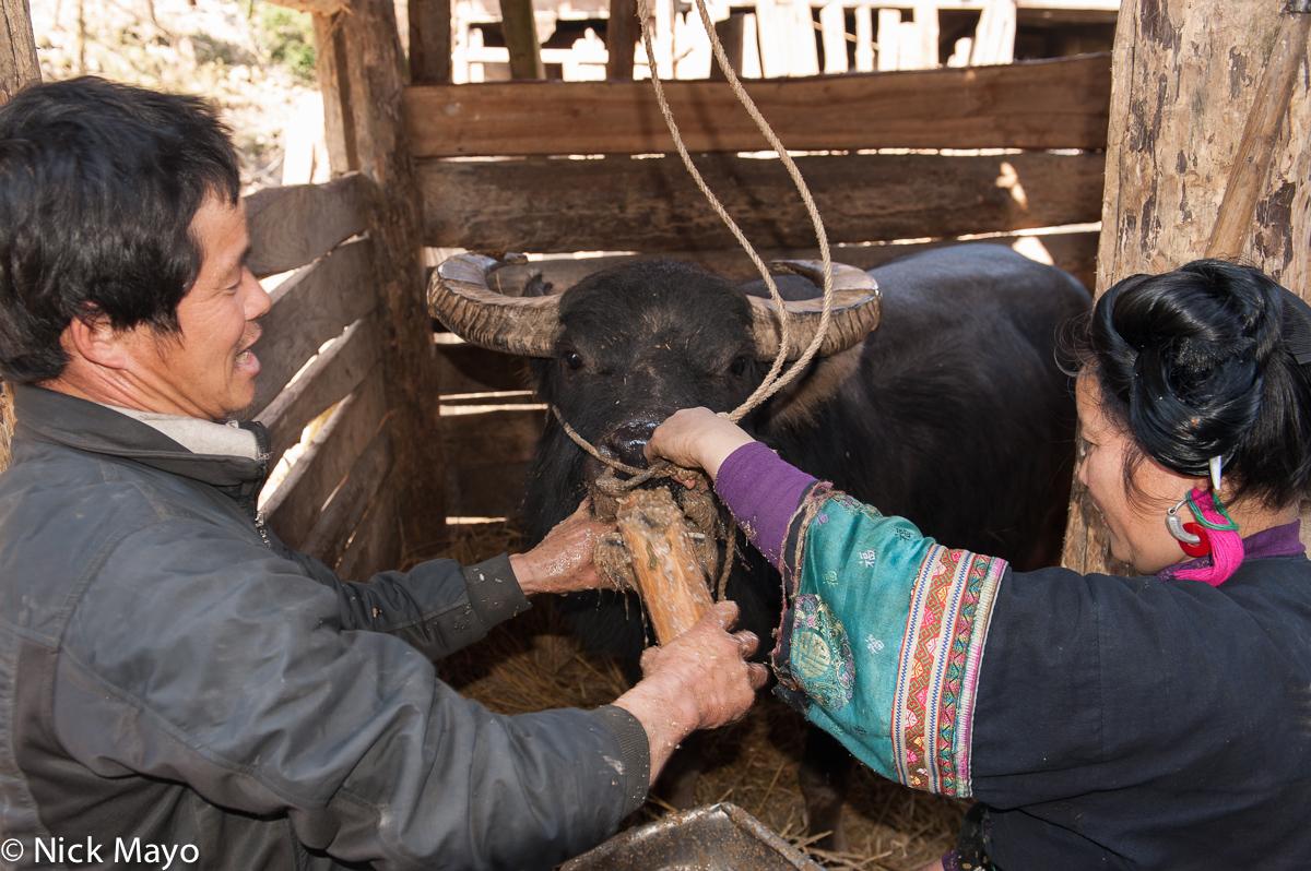 China,Earring,Guizhou,Hair,Miao,Water Buffalo, photo