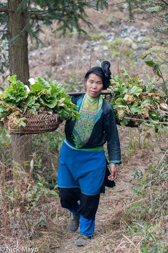 China,Guizhou,Hair,Miao,Shoulder Pole,Vegetable, photo