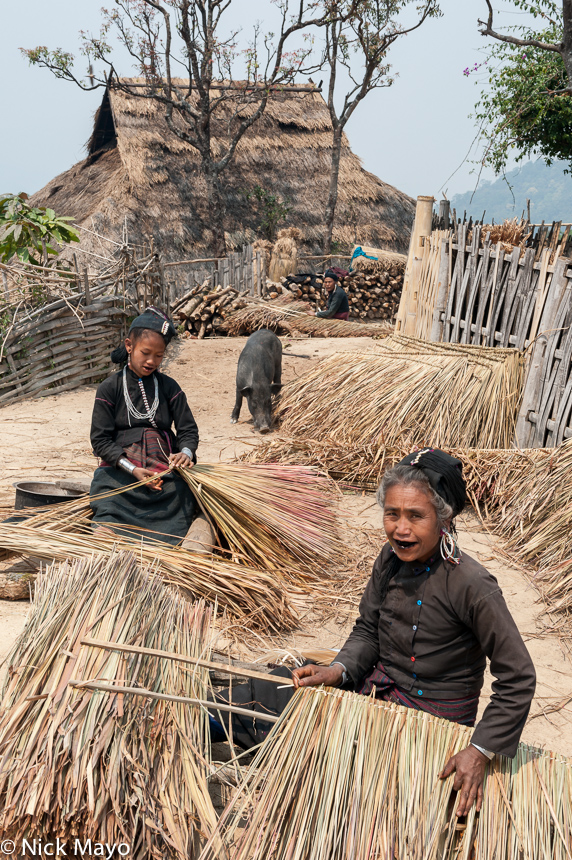 Burma,Eng,Pig,Preparing Thatch,Residence,Shan State,Thatch, photo